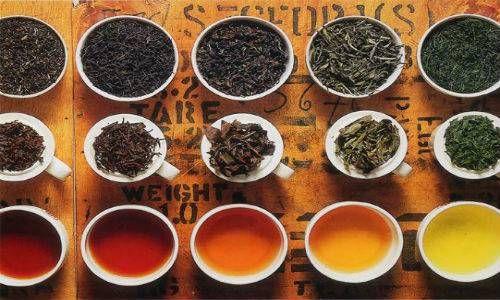 Biała herbata - odmiany