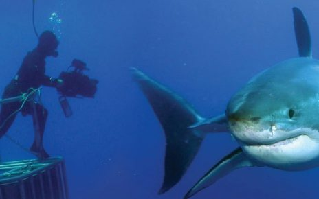 Czy nurkowanie z rekinem jest możliwe?